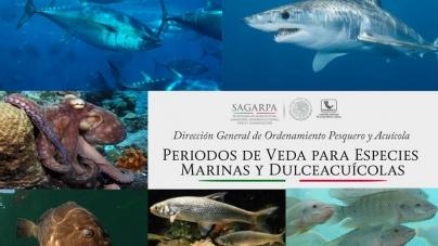 Periodos de veda para especies marinas y dulceacuícolas