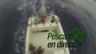 Pesca en Directo 2014: Episodio 8. Barrilete y dorado de Zihuatanejo (parte 1)