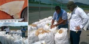 Aseguran 3.5 toneladas de aleta de tiburón, en Manzanillo