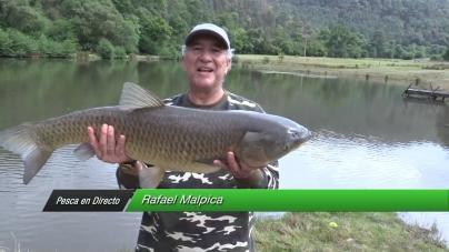 """Pesca en Directo 2015. Episodio 9: """"Carposaurio"""" del Oriente de Michoacán (parte 2)"""