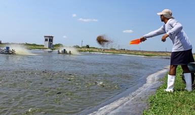 México es ya una potencia en producción acuícola y su tasa de crecimiento es de 15 por ciento