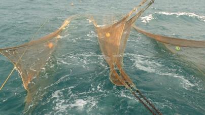 Ruta de sociabilización para integrar al sector productivo en el diseño de una red de zonas de recuperación pesquera en la Región de las Grandes Islas, Golfo de California