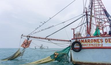 EUA certifica a México por acciones que regulan captura incidental de tortugas marinas