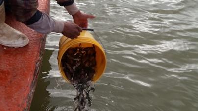 Siembran en presas de Sonora más de 1.7 millones de crías de tilapia en 2016