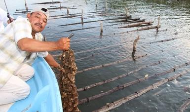 Nayarit con 66 mil toneladas de pescados y mariscos al año que valen 2,161 MDP, es la cuarta entidad con mayor valor de producción