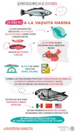 Para combatir tráfico ilegal de totoaba (Totoaba macdonaldi), México, China y Estados Unidos buscarán mecanismos para su legalización
