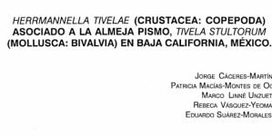 Herrmannella tivelae (crustacea; copepoda) Asociado a la almeja pismo, tivela stultorum (mollusca: bivalvia) en Baja California, México