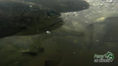 Pesca en Directo – Sanidad e inocuidad: Retos de la acuacultura en Michoacán – Ep. 13 Temporada 7