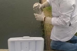 Sinaloa y pesca en d 1