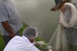 Sinaloa y pesca en d