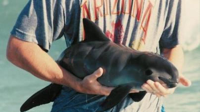 Greenpeace: CONAPESCA e INAPESCA, responsables de la extinción de la vaquita marina (Phocoena sinus) al nulificar acciones y ordenamientos para salvar este mamífero