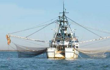 Pescadores son pilar de la economía mexicana