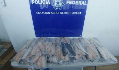 Aseguran 104 filetes de totoaba (Totoaba macdonaldi) en Aeropuerto Internacional de Tijuana