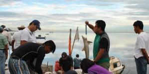 Inviable prohibición a pesquerías de tiburones y rayas en México propuesto por Ley General de Biodiversidad: Ecosur