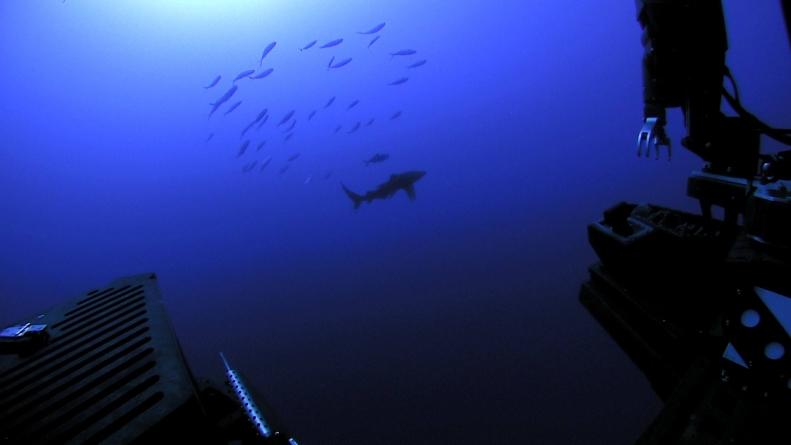 La Administración Nacional Oceánica y Atmosférica realiza expedición en el Golfo de México
