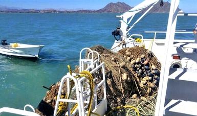 Especialistas del Museo de la Ballena de La Paz, BCS, extraen redes fantasma en el polígono de la vaquita marina