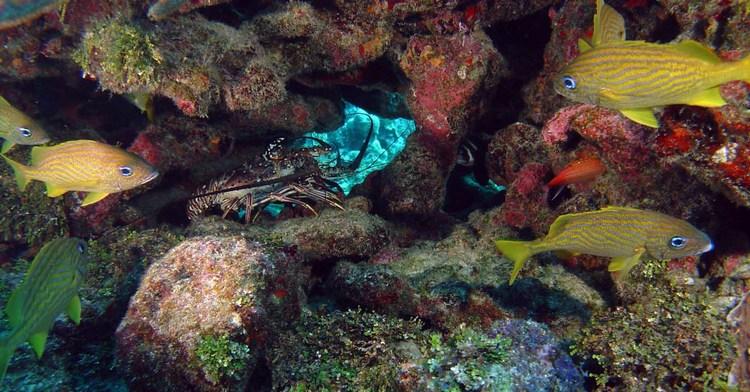 Los ecosistemas marinos protegidos de México incorporan 70 millones de hectáreas