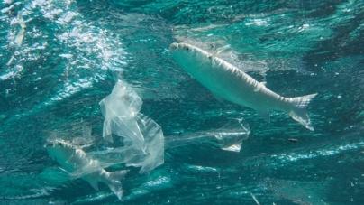 Día Mundial de los Océanos, por un futuro libre de plásticos