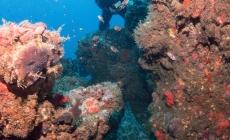 Declararán ANP los arrecifes de Los Tuxtlas del Golfo de México en Veracruz