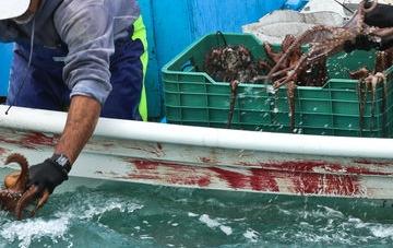 En gestión pesquera internacional México es un referente