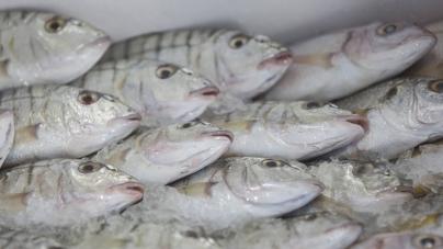 Un tercio de los bancos de peces están sobreexplotados