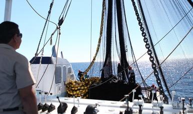 Veda de cuatro túnidos en el Océano Pacífico Oriental para los años 2018 a 2020; inició el 29 de julio pasado
