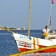 El 1 de agosto inició temporada de captura de pulpo (Octopus maya y Octopus vulgaris) en costas de Yucatán y Campeche