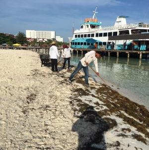 Científicos diseñan agenda nacional para investigación y manejo de sargazo (Sargassum sp) en el Caribe mexicano