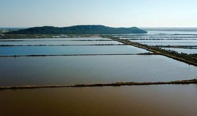 Activan seguros agropecuarios y acuícolas por huracán Willa y depresión tropical Vicente