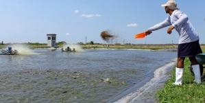 La pesca y la acuacultura crecen más que la población