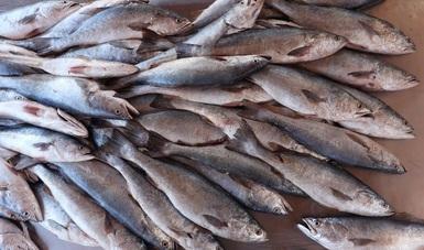 Exportación de pesquerías mexicanas del Alto Golfo de California permite publicar el registro federal de EU el aviso de comparabilidad