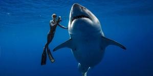 Gran legendario tiburón filmado nadando con buzos en Hawái