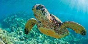 México: santuario ancestral de las tortugas marinas