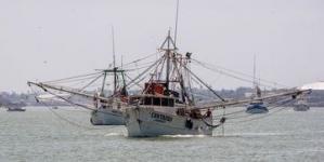 Inició este viernes 15 de marzo la veda temporal para la pesca de todas las especies de camarón en el Océano Pacífico