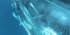 Buceadores ven algo raro en el mar – miran de cerca y entienden que tienen que actuar inmediatamente