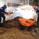 Las y los marinos mexicanos, participan en el retiro de sargazo en el Mar Caribe