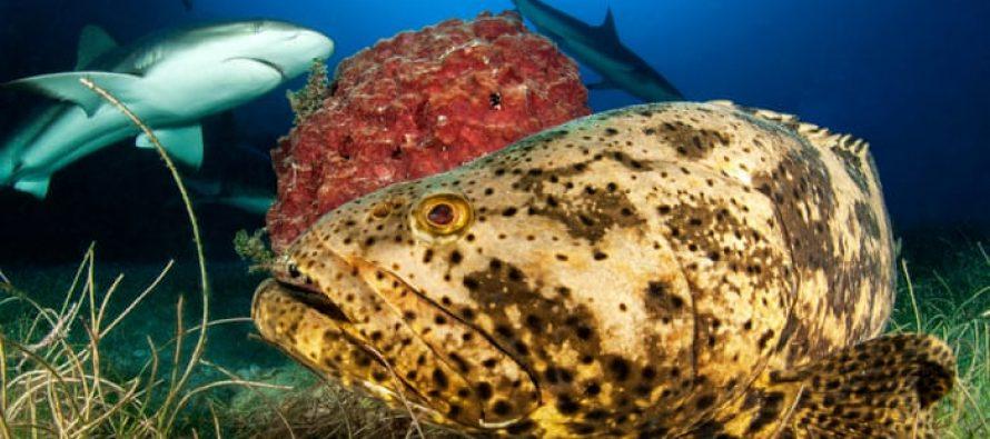 Cuba reforma drásticamente las leyes de pesca para proteger los arrecifes de coral, tiburones y rayas