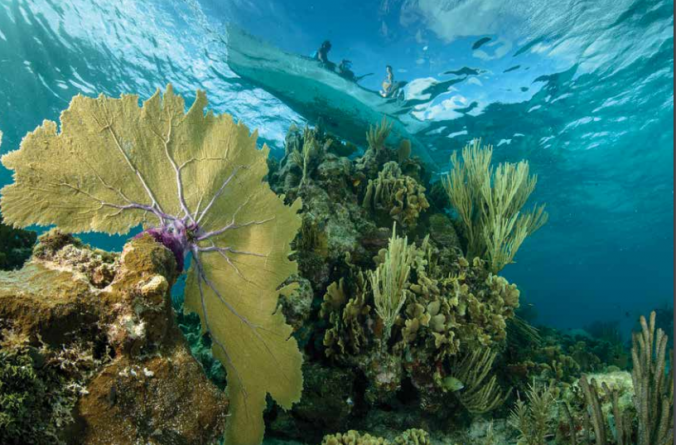 Reporte del Arrecife Mesoamericano