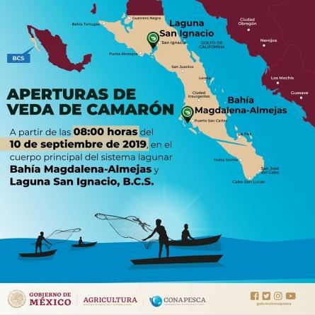Fin a la veda de camarón en Bahía Magdalena-Almejas y San Ignacio, BCS