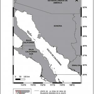 Vigente al 15 de octubre, veda para pelágicos menores en el Golfo de California como sardina, macarela y anchoveta