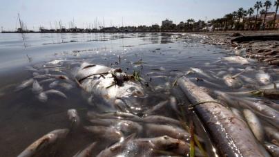 Retiradas tres toneladas de peces muertos en el mar Menor