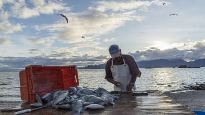 De pescadores a guardianes del mar: la historia del primer refugio pesquero de México
