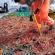Recuperan 16 redes totoaberas en el Alto Golfo de California