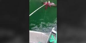 Un pescador salva a un águila americana que estaba atrapada por un pulpo