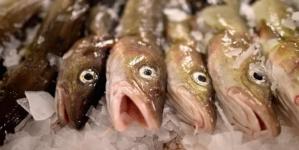 Los ministros de la UE optan por continuar la sobrepesca, a pesar de la fecha límite de 2020