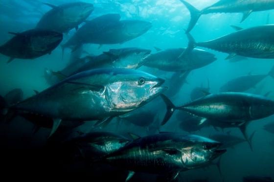 Los océanos pierden oxígeno a una velocidad sin precedentes, advierten expertos