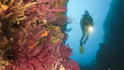 Los corales del Mediterráneo, indefensos ante las redes de pesca