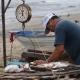 Buscan pescadores que el Dorado deje de ser una especie 'fifí'