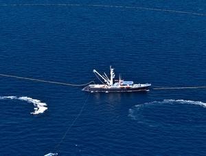 Inició ayer la temporada de pesca de atún en el Océano Pacífico