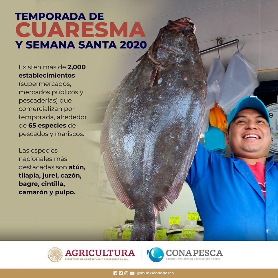 ¡A consumir!, pescados y mariscos frescos mexicanos